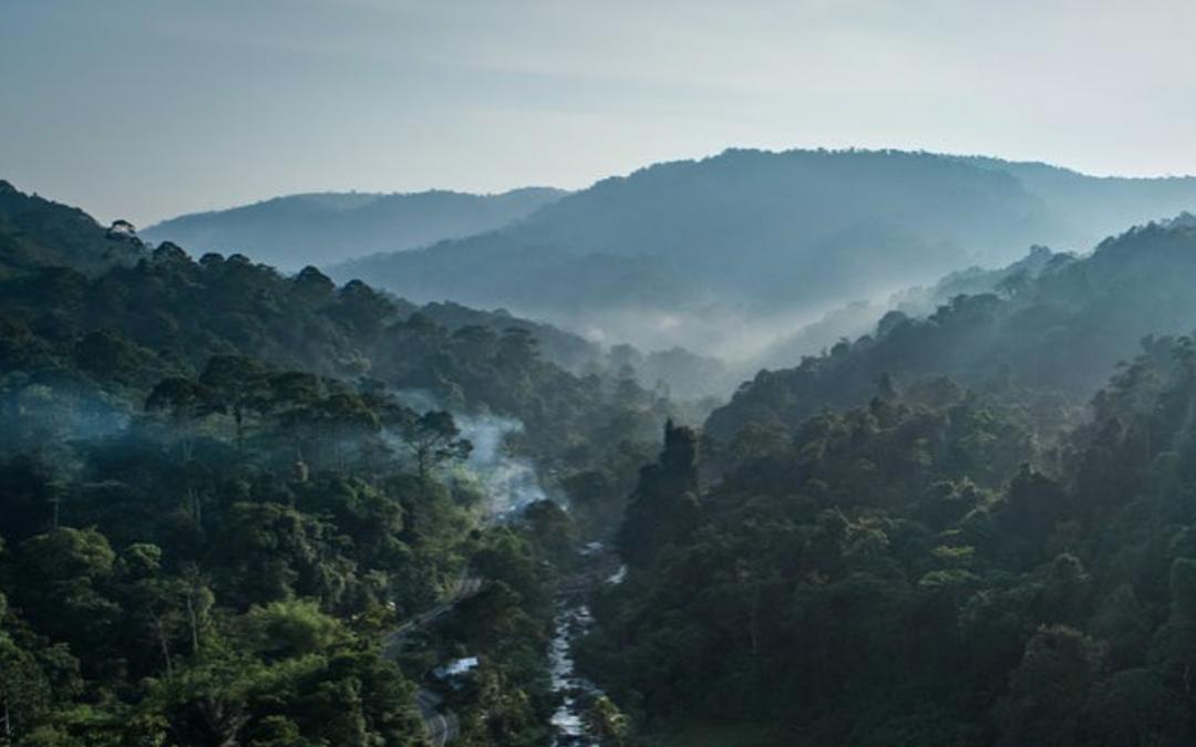 Wat jij kan doen tegen de branden in de Amazone!