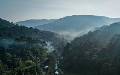 Wat jij kan doen tegen de branden in de Amazone