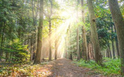 Podcast : hoe ik mijn eigen weg volg in leven en ondernemen met mijn hooggevoeligheid