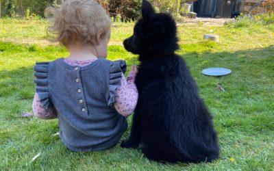 Zes positieve effecten van een huisdier voor je kind